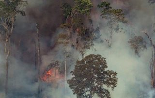 """Nuestros bosques se nos mueren"""