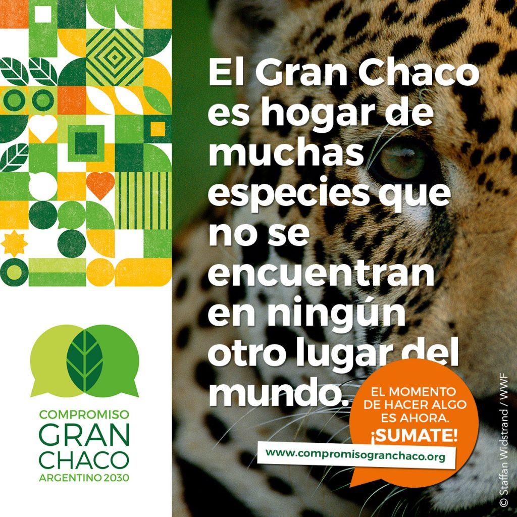 El Gran Chaco es hogar de muchas especies que no se encuentran en ningun otro luar del mundo